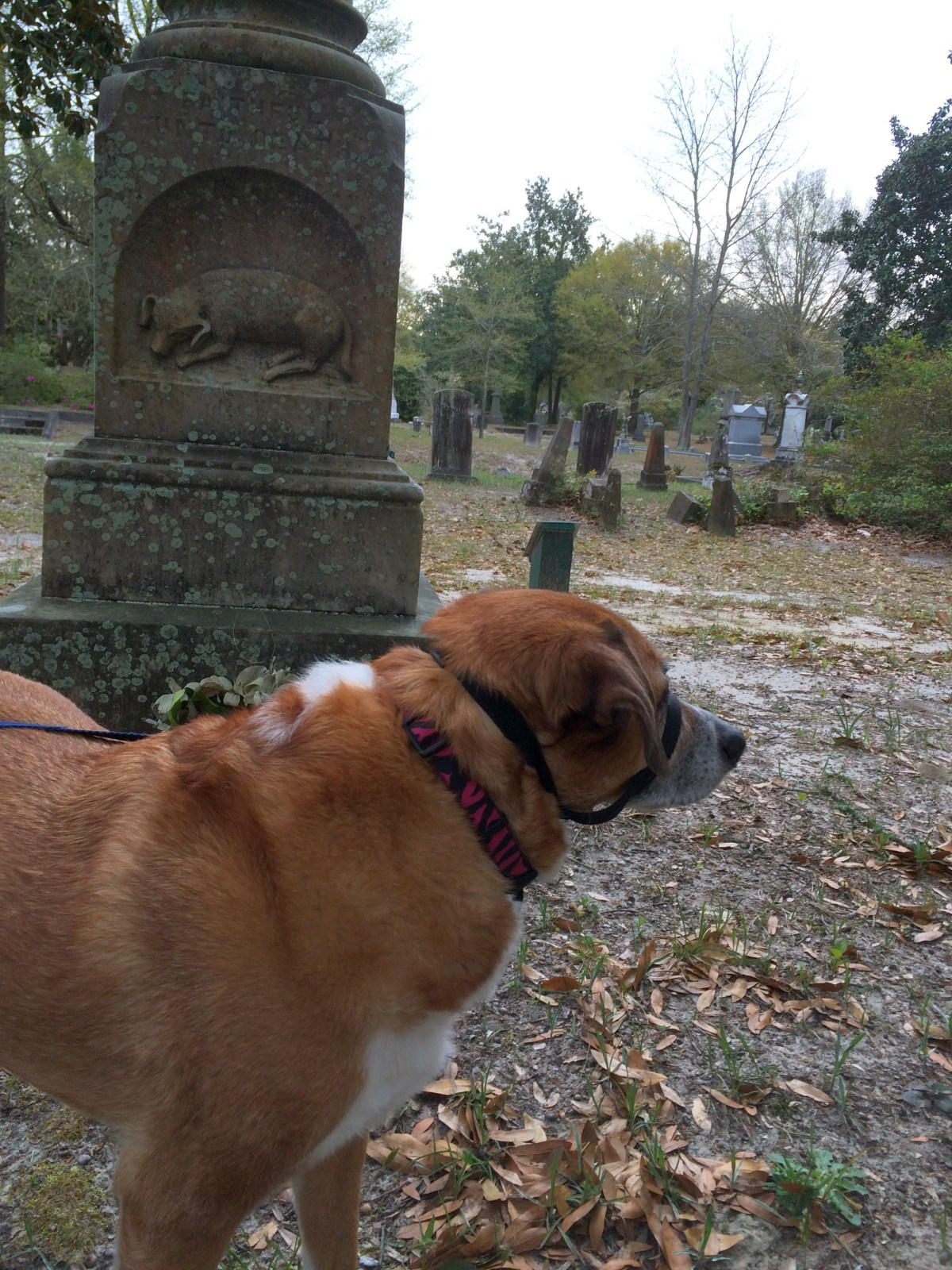 Back to Oakdale Cemetery